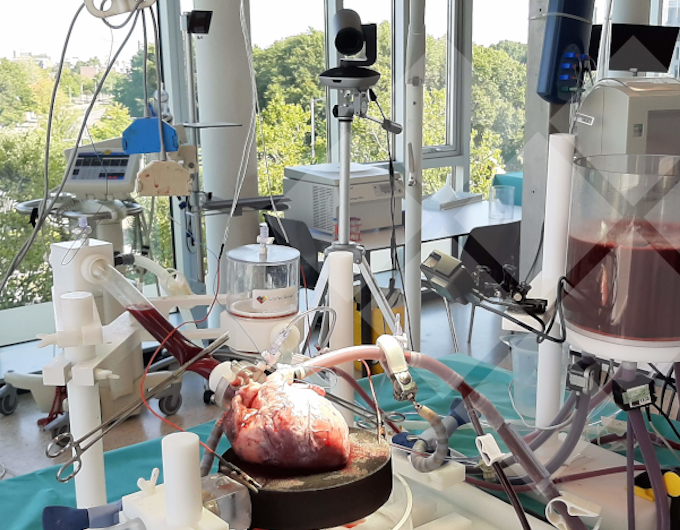 Online Camera filming PhysioHeart
