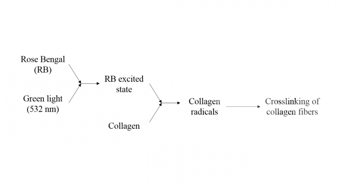 Biomedical Applications of Photo- and Sono-Activated Rose Bengal/ A Review - Vanerio - Fig 3